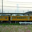 東員駅(北勢線)のコスモス