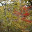 ☆今年の紅葉をふりかえって。。くじゅう編 その3☆
