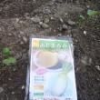 シーダーテープ種子で野菜の植え付け