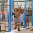 GW中のスケジュールのご案内です(*^-^*)  犬のしつけ教室@アロハドギー