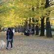 昭和記念公園のイチョウ並木・・2