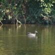 吉藤池周辺で野鳥の探索♪(1月16日)