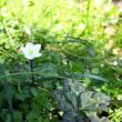ミズバショウ咲く公園を訪れる 大窪いやしの森公園  平成31年3月20日