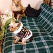 手縫いの犬服