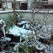 牛滝は、厳寒の時期自宅で等身大猫つくり