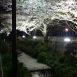 目黒川緑道の夜桜 2018