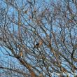 里の冬 枝に透ける鳥