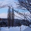 北海道立図書館前庭とその近景