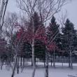 冬の運動公園(~~;