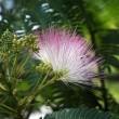 不思議な花