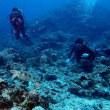 なんか久々のケラマ。沖縄ダイビング 那覇シーマリン