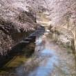 2018さくら日和 - 石神井川
