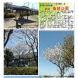 花巡り 「桜-その472」 久喜市栗橋文化会館イリス