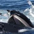♯1198 市場を泳ぐクジラ