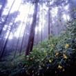 林間のキツリフネ2