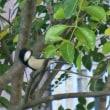 餌台に集まる小鳥たち