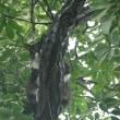 メメの特技は木に登ること