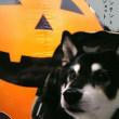 懐かし写真ハロウィンと秋