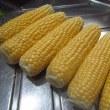 トウモロコシ「おおもの」(1)の収穫