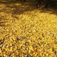 秋の名残です