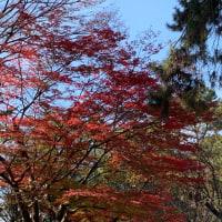今日は奈良公園に❗️