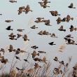 北印旛探鳥(ヨシガモ他)