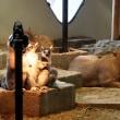 EXPOCITY 「NIFREL(ニフレル)」の動物たち