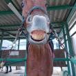エイチエヌ(2041鞍)馬場レッスン