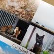 天才!志村どうぶつ園でも取り上げられた、相島のハート模様があるネコのポストカードを相島限定で販売しています〜〜!
