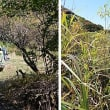野ねずみ山日記 くじゅうリンドウ広場の野ねずみ前線ベース 2日目