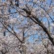2018年・桜