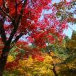 秋の名古屋(よしだ麺)