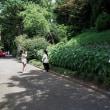 皇居東御苑の「はるかのひまわり」(3)