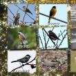 広島で出会った野鳥たち