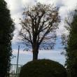 葉の落ちた老木に自分を投影させると勇気がもらえるなー」今日のひととこ