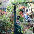 松を切った庭