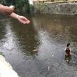 高瀬川のおとこまえ♪