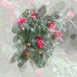 花彩々  山茶花の花・・