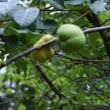 四季折々820 初秋の北海道大学植物園1