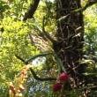 近所で見かけたドラゴンフルーツ