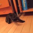 床暖と猫と私