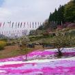 清里便り : 残雪の甲斐駒ケ岳と八ヶ岳と松の枝下ろし