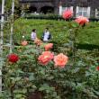 旧古河庭園のバラ・・3