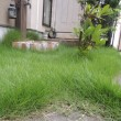 芝刈り~…( ̄д ̄)