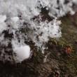 雪の日の楽しみ