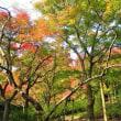 晩秋の植物公園