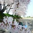 春の援農、花見弁当。