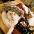 Mele Kalikimaka メリー・クリスマス