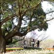 その気になれば 気になる木 ~会津若松市御薬園・都内の公園で~