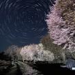 津南の桜と星